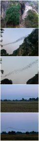 nietoperze battambang